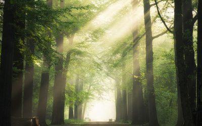 Forêt primaire en Pologne : condamnation par la justice européenne