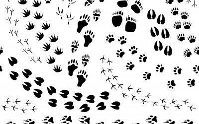 ORE environnement : le 1er contrat pour la biodiversité